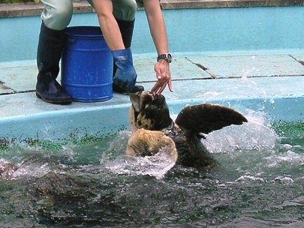 飼育係の人に餌をおねだりしています。