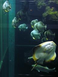 お~!魚がいっぱい♪