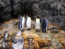 ペンギンの井戸端会議